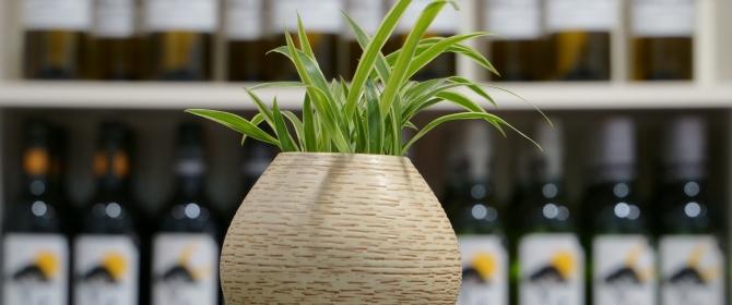 Topfplanze mit Wein im Hintergrund